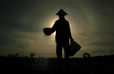 foto-de-arrozales