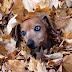 Φθινοπωρινή ισημερία και ζώα...