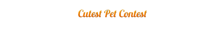 Cutest Pet Contest