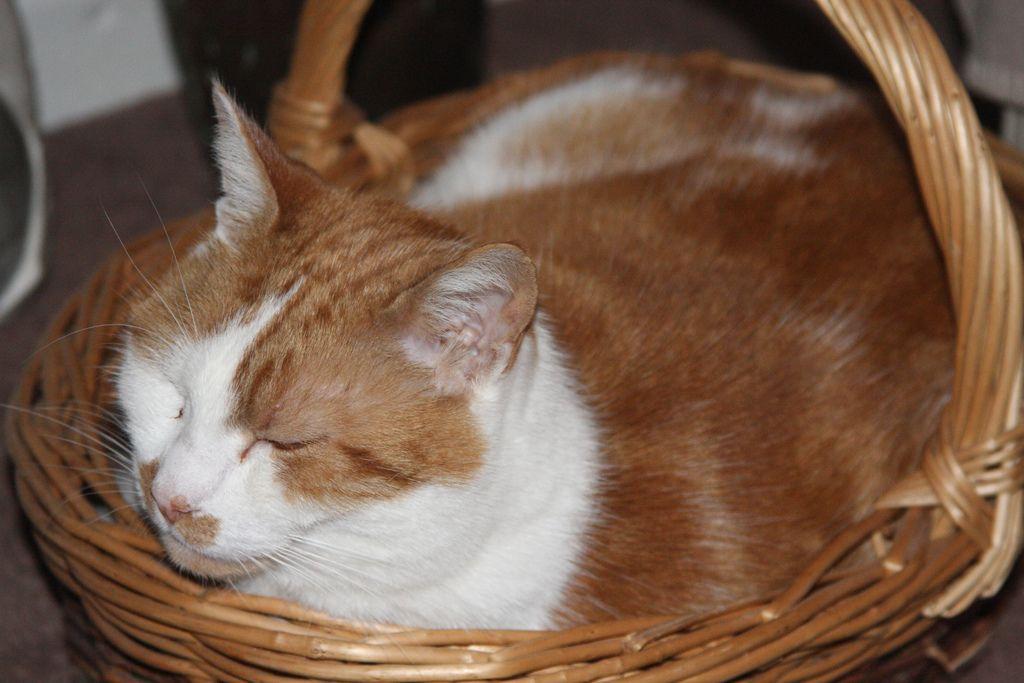 15. Cat in a basket by judy dean