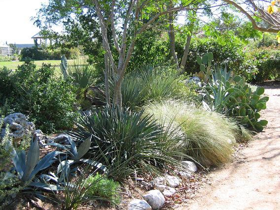 goundscape solutions  native texas plants  xeriscape
