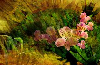 Fondo Romatico flores rosadas
