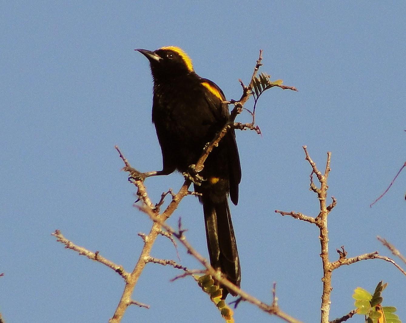 Worksheet. Aves de Venezuela con Historias enero 2014