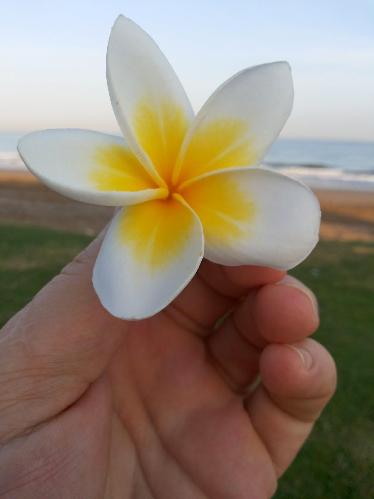 Un fiore nel deserto / A flower in the desert