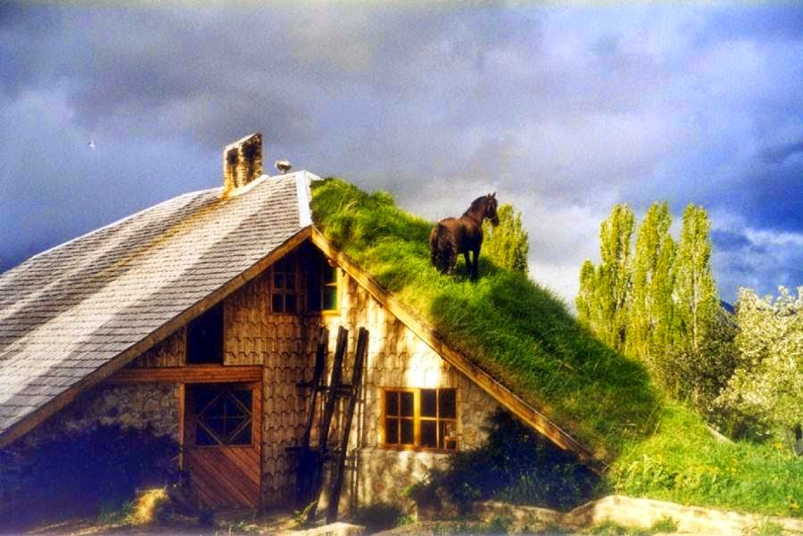 Dawnsofia Traditional Grass Roofs Of Norway