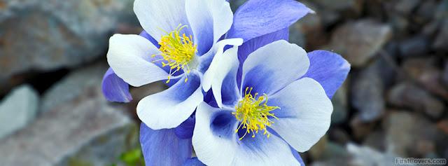 "<img src=""http://4.bp.blogspot.com/-ncyWX2mxwyk/UfW7HSZWdhI/AAAAAAAAC-4/eLZRoMArZLY/s1600/beautiful_flowers-4455.jpg"" alt=""Flower Facebook Covers"" />"