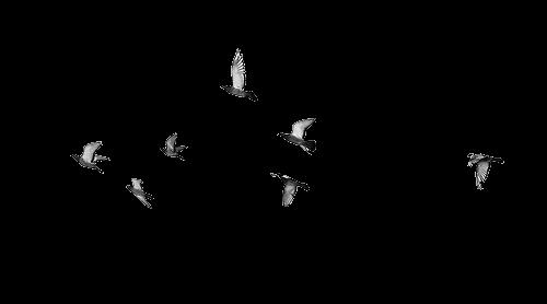 photoscape brushes ilustrações pássaros