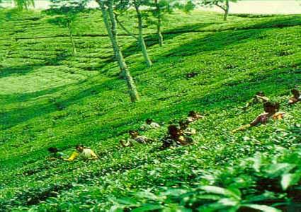 nice location  sylhet  bangladesh world beauty scine