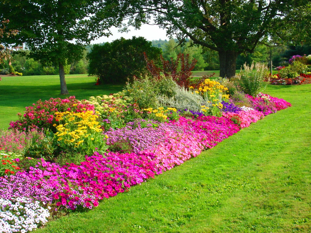 Beautiful flower wallpapers for you spring wallpaper for Beautiful garden layouts