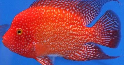 8 Macam Umpan Hidup Jitu Untuk Mancing Ikan