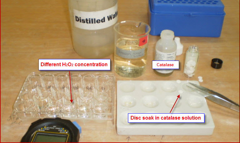 decomposition of h2o2 and effect of catalase biology essay - the effect of substrate concentration on the activity of the enzyme catalase a level biology project aims this is an experiment to examine how the concentration of the substrate hydrogen peroxide affects the rate of reaction of the enzyme catalase.