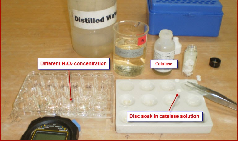 biology coursework hydrogen peroxide Hydrogen peroxide experiments by mary margaret peralta updated april 28, 2018 chemically, hydrogen peroxide has a similar composition to water, except its molecule has an additional oxygen atom.