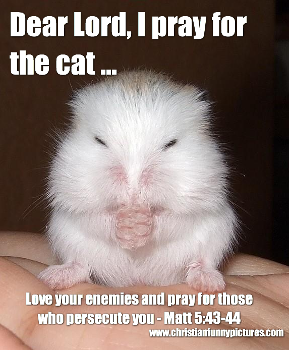 Spiritual Humor - Page 2 Mouse+pray+for+the+cat