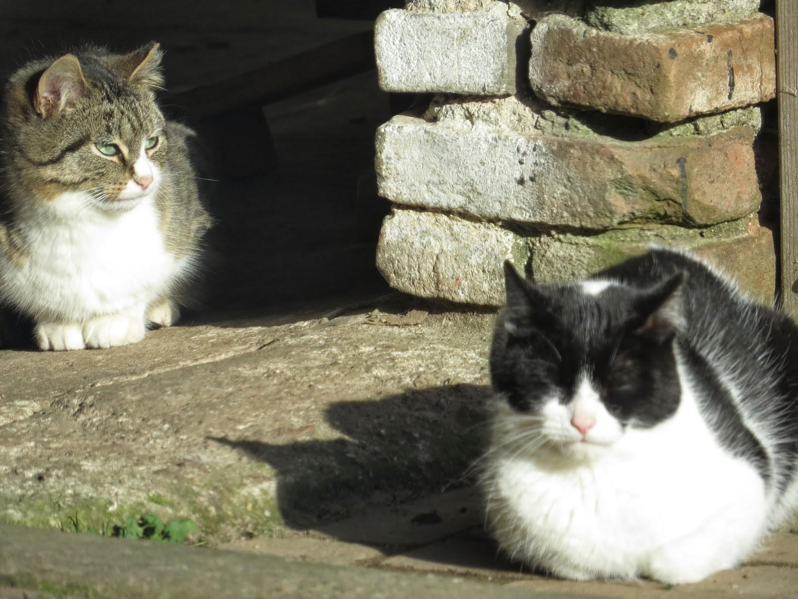 Liegt im Frebruar die Katz im Sonnenschein, muss sie im März untern Ofen rein.