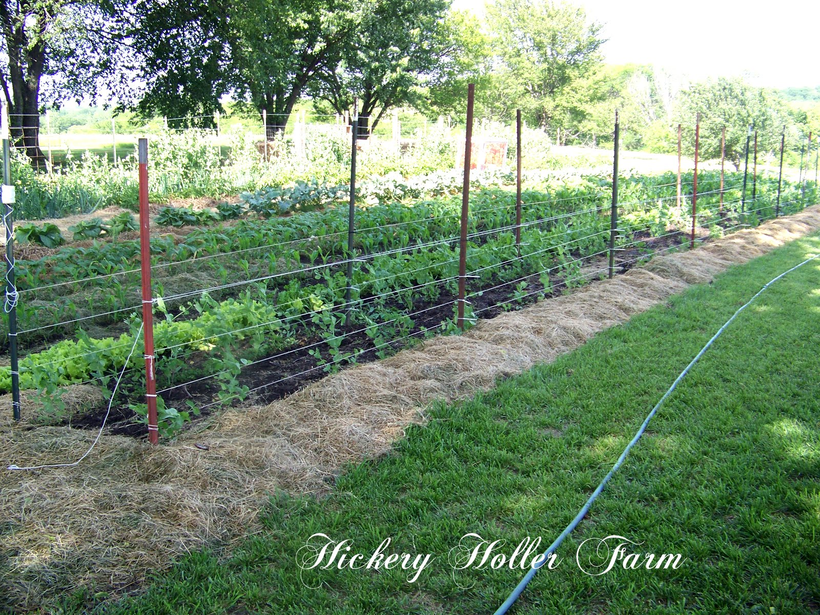 No Till Gardening And Heavy Mulch