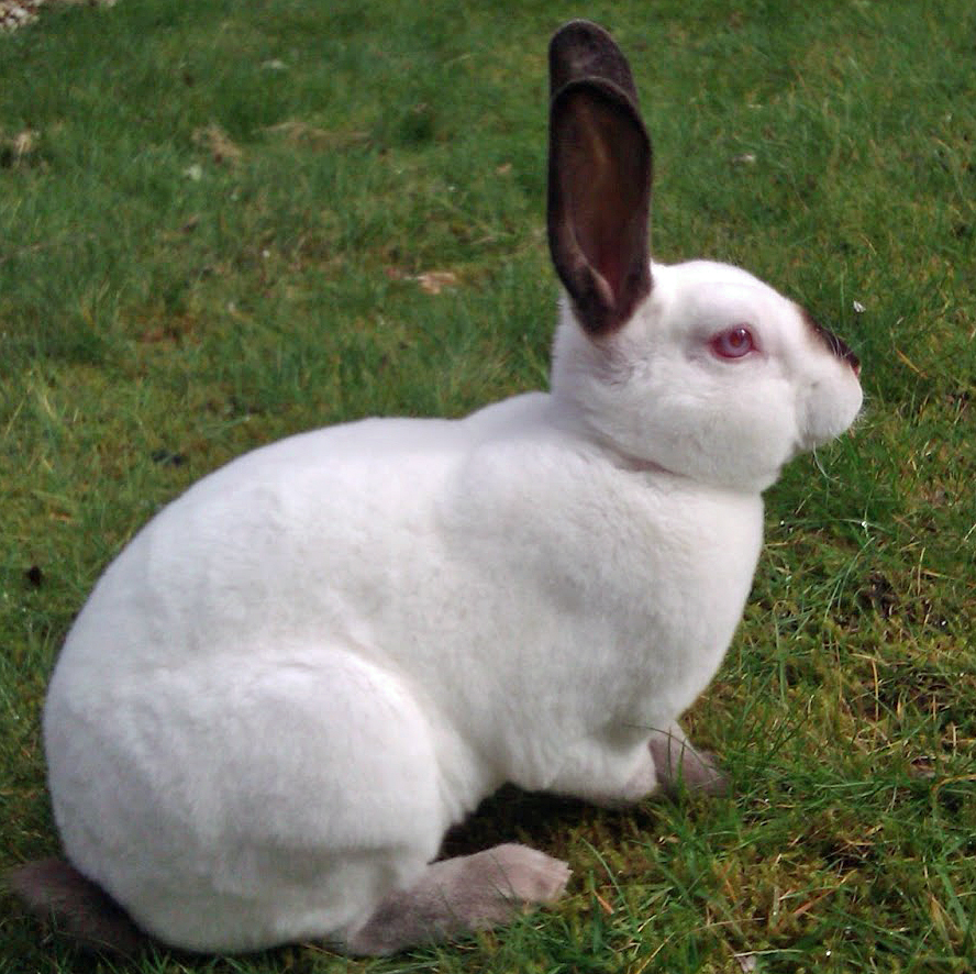 The Bunny Hut: Body language of rabbits