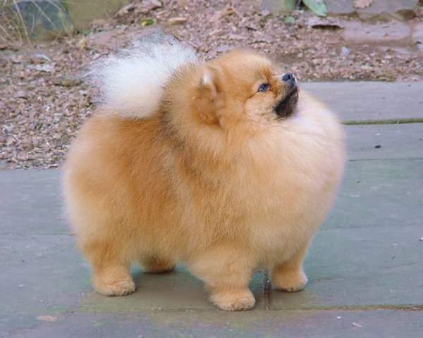 Google Image Result For HttpbpblogspotcomnebgawYBFDE - Someone should have told this dog owner that pomeranians melt in water