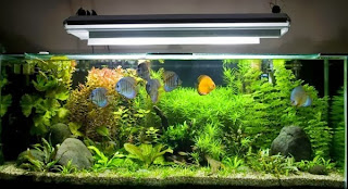 Tips Menjaga Kualitas Air Aquarium