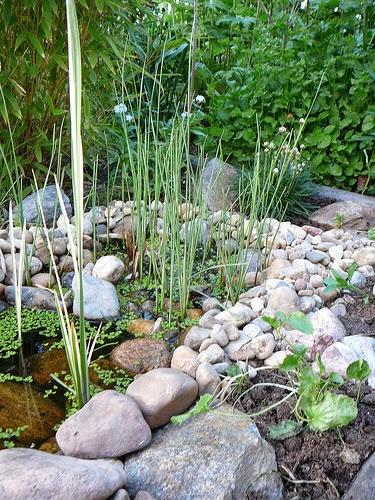 plantes à feuillage