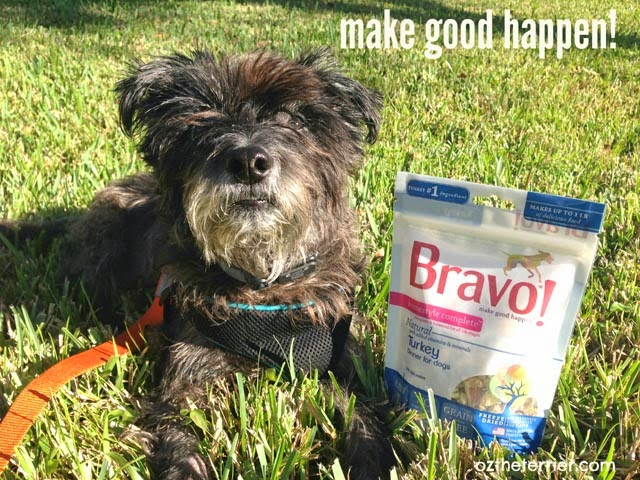 Oz the Terrier says Make Good Happen with new Bravo Pet Foods freeze dried dinners