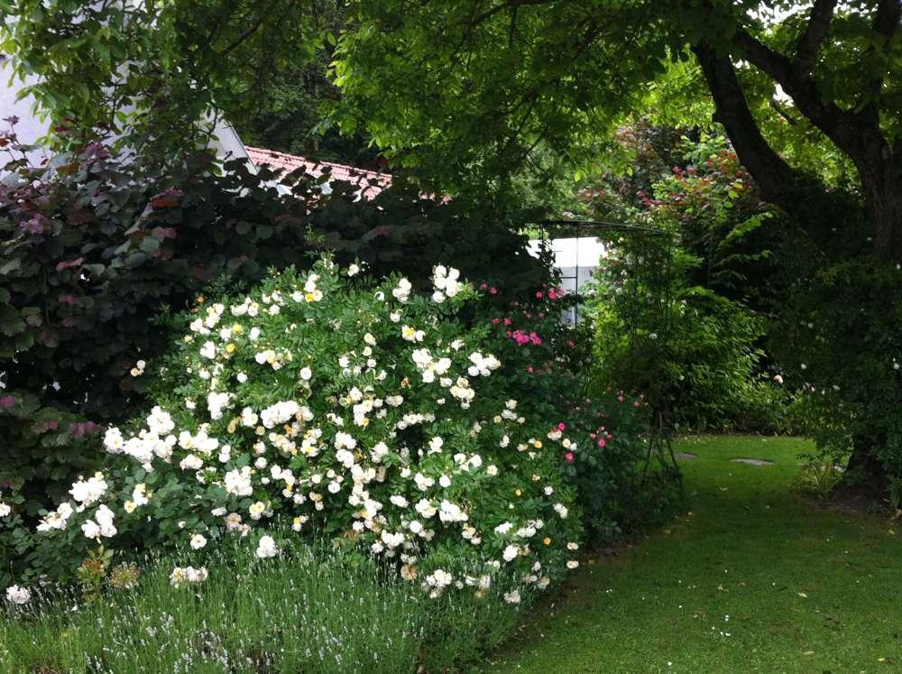 wir lieben rosen der nussbaum und die. Black Bedroom Furniture Sets. Home Design Ideas