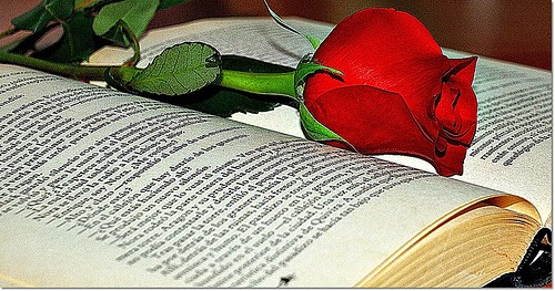 libro, rosa, sant jordi, el zorro con gafas