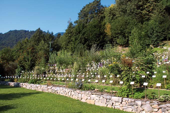 Centro ricerca piante officinali veneto giardini da for M innamorai giardino dei semplici accordi