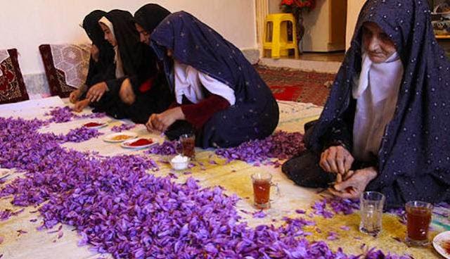 Keistimewaan Bunga Za'faran (Saffron) Yang Mungkin Kita Tidak Tahu !..