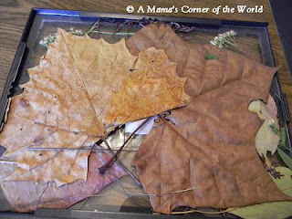 Framed fall collage craft idea at http://www.amamascorneroftheworld.com