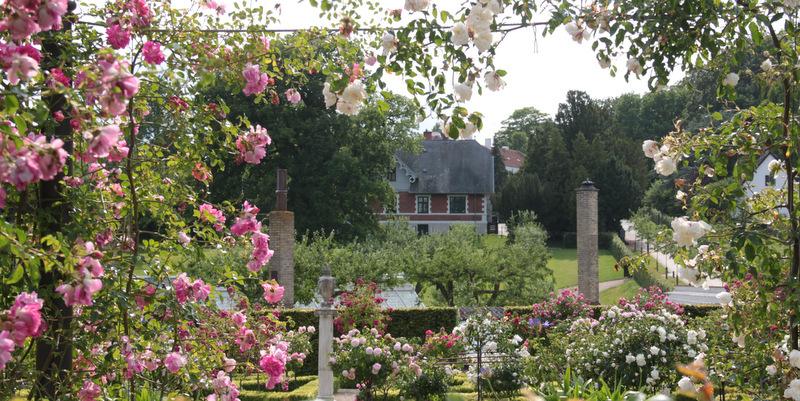 Bernstorffs rosenhave