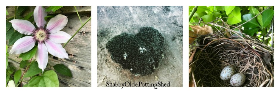 Shabby Olde Potting Shed