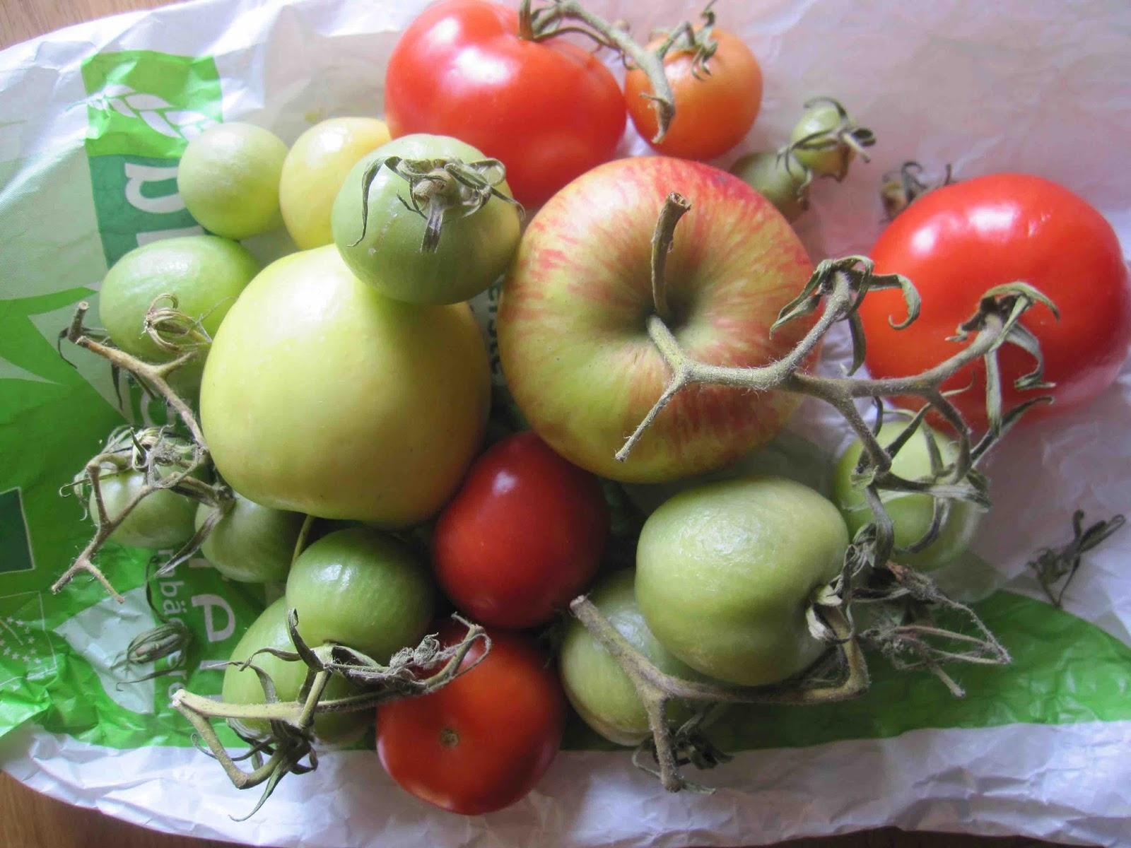 wunder bare sch tze gr ne tomaten err ten lassen. Black Bedroom Furniture Sets. Home Design Ideas