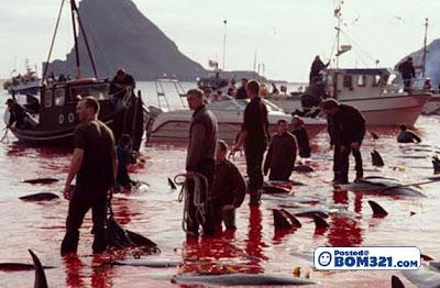 Pembunuh Ikan Dolphin Di Denmark