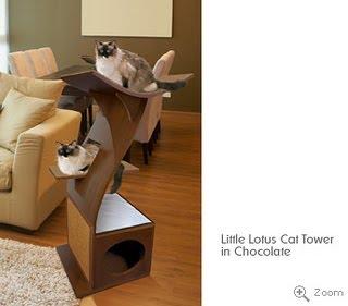 Meu gato com m veis divertidos para seu gato - Cama para gato ...