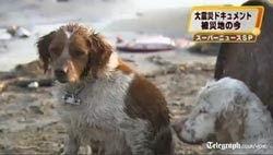 29/04/011 Una tragedia sin precedentes como el terremoto seguido de tsunami y post. alerta nuclear