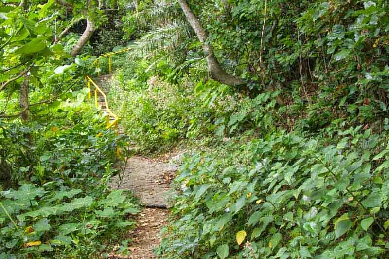 stairs, yellow handrails