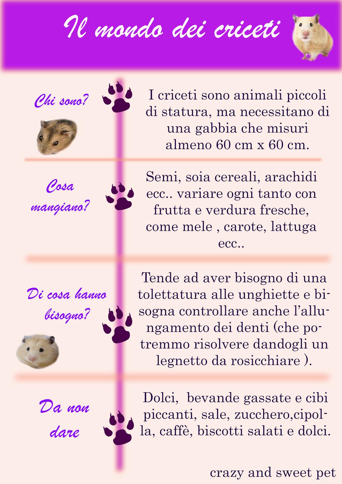 infografica-animali-criceti