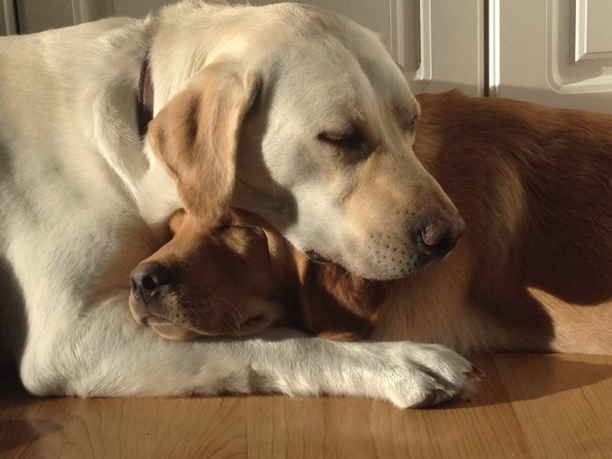 Cute dogs - part 6 (50 pics), two dogs cuddling and sleeping