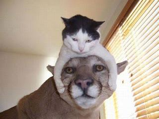 Fanny Cats