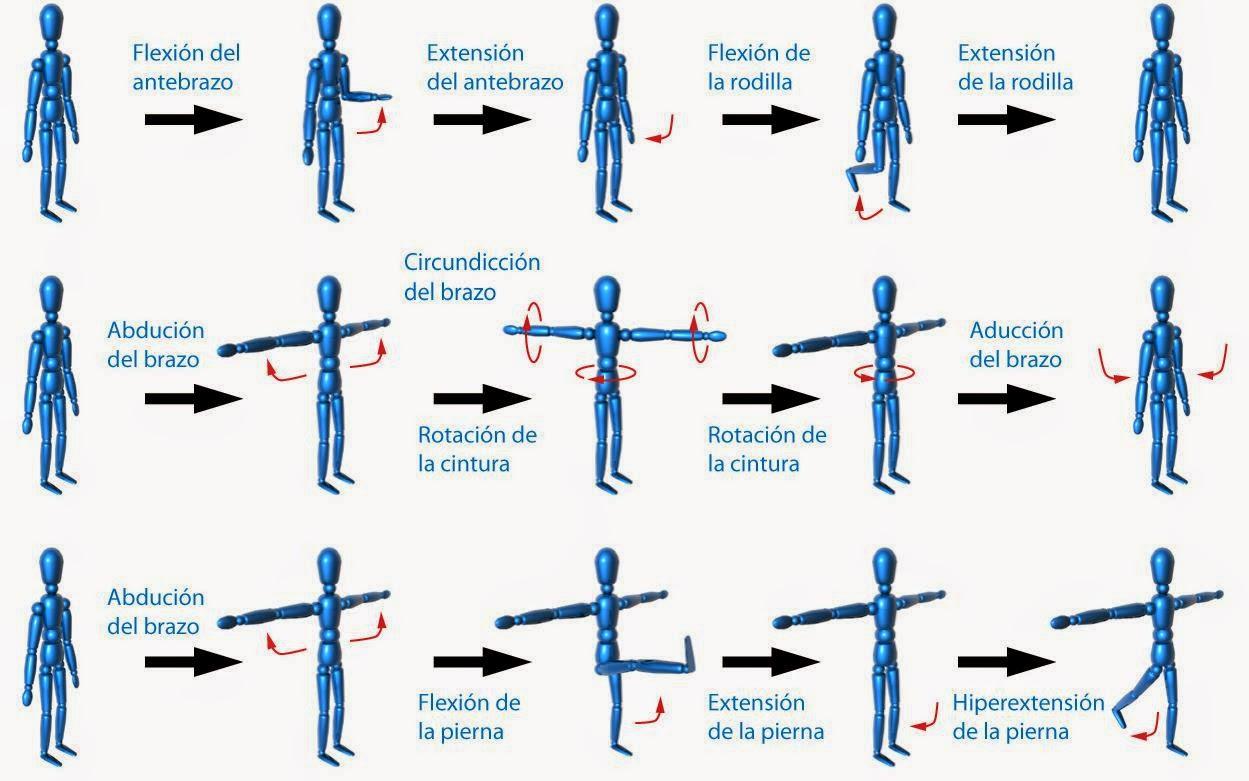 Movimientos Articulares (Definición y clasificación) - ODuBer CiTy
