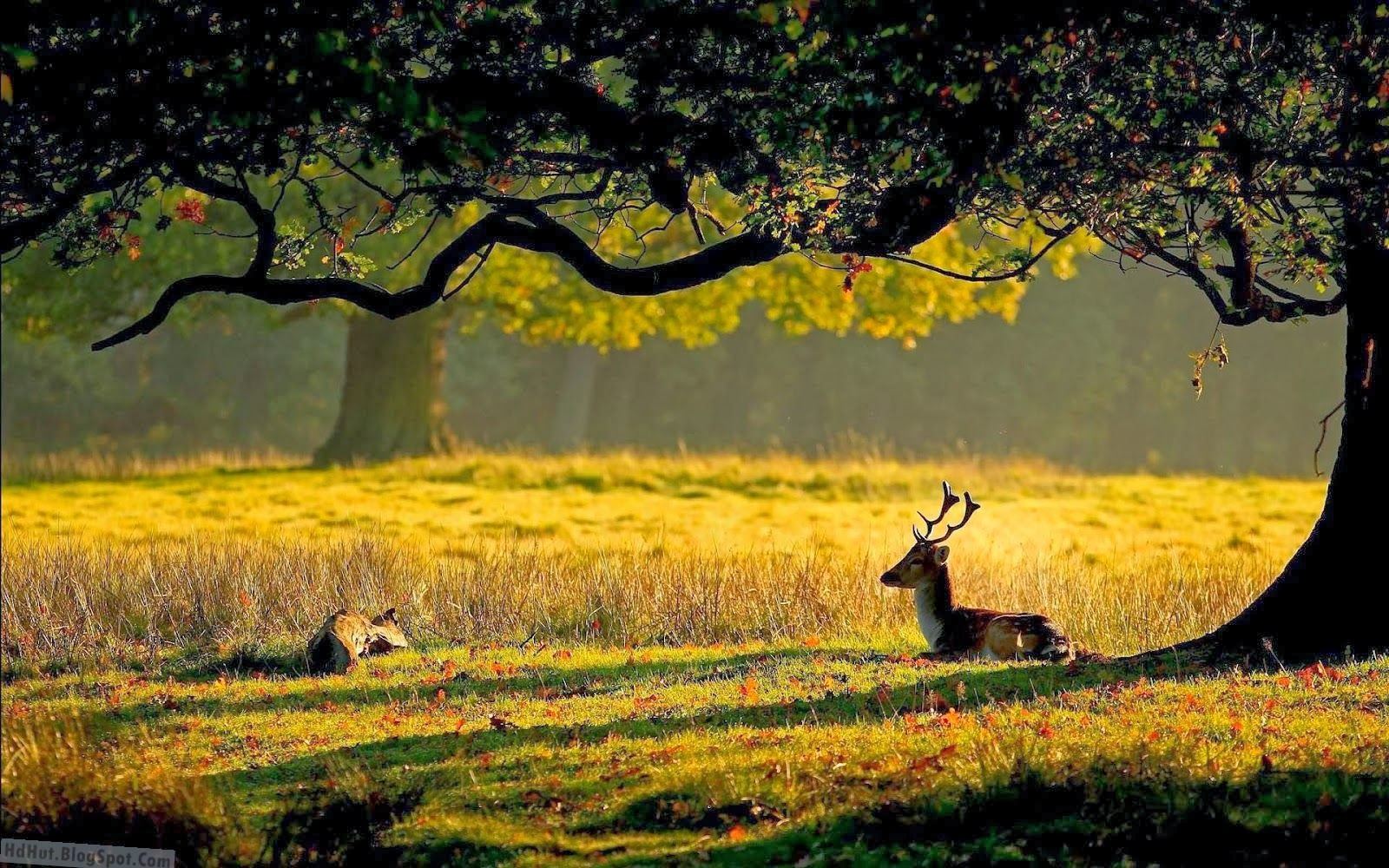 nature tree forest deer Wallpapers