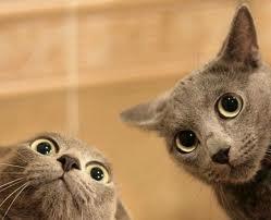 Komedi Kedi Oyunu