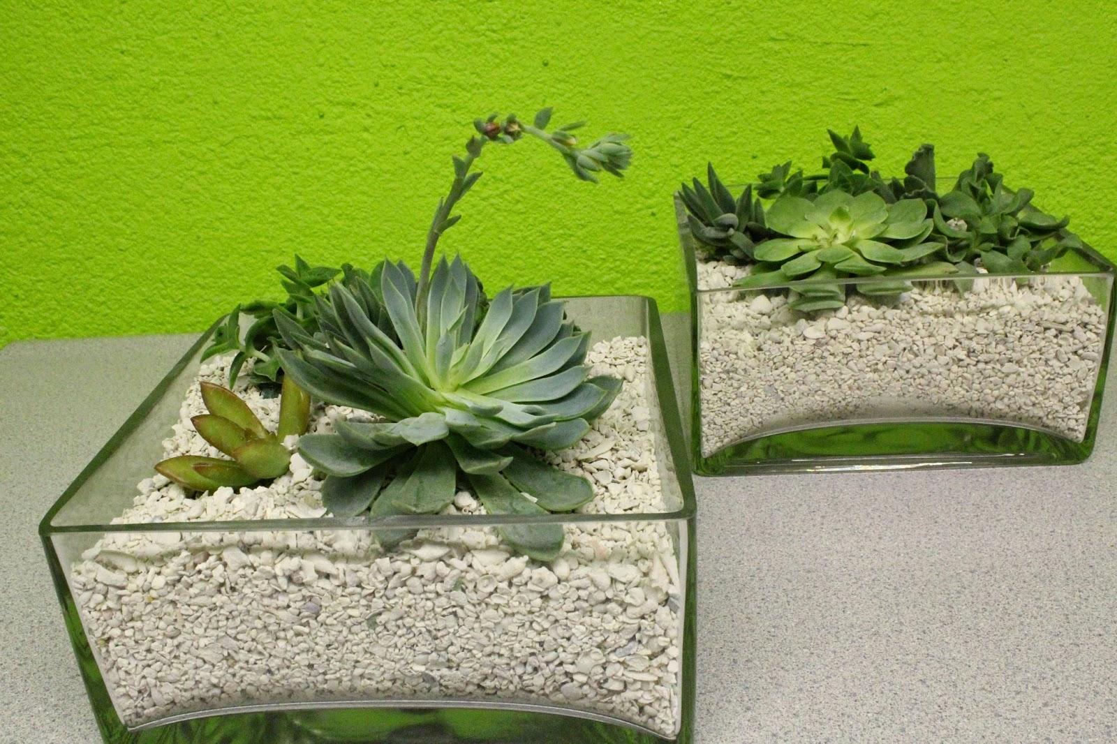 Succulents In White Gravel An Octopuss Garden Design Las Vegas