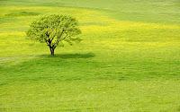 Hình nền sân cỏ xanh mùa hè
