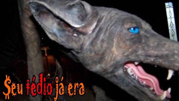 Chupa cabra é achado no Texas, o bicho tem olhos azuis