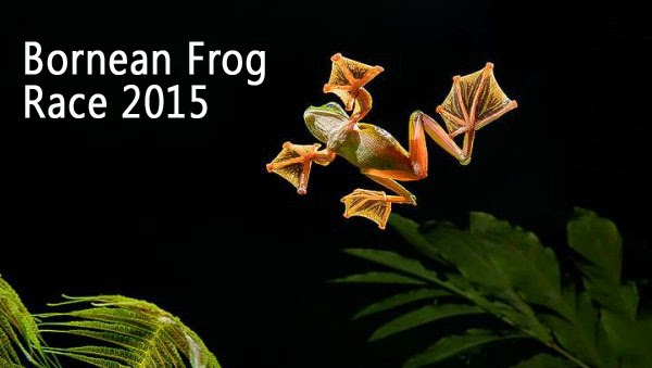 The Bornean Frog Race 2015