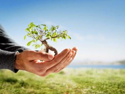 Fakta Unik dan Menarik Tentang Lingkungan