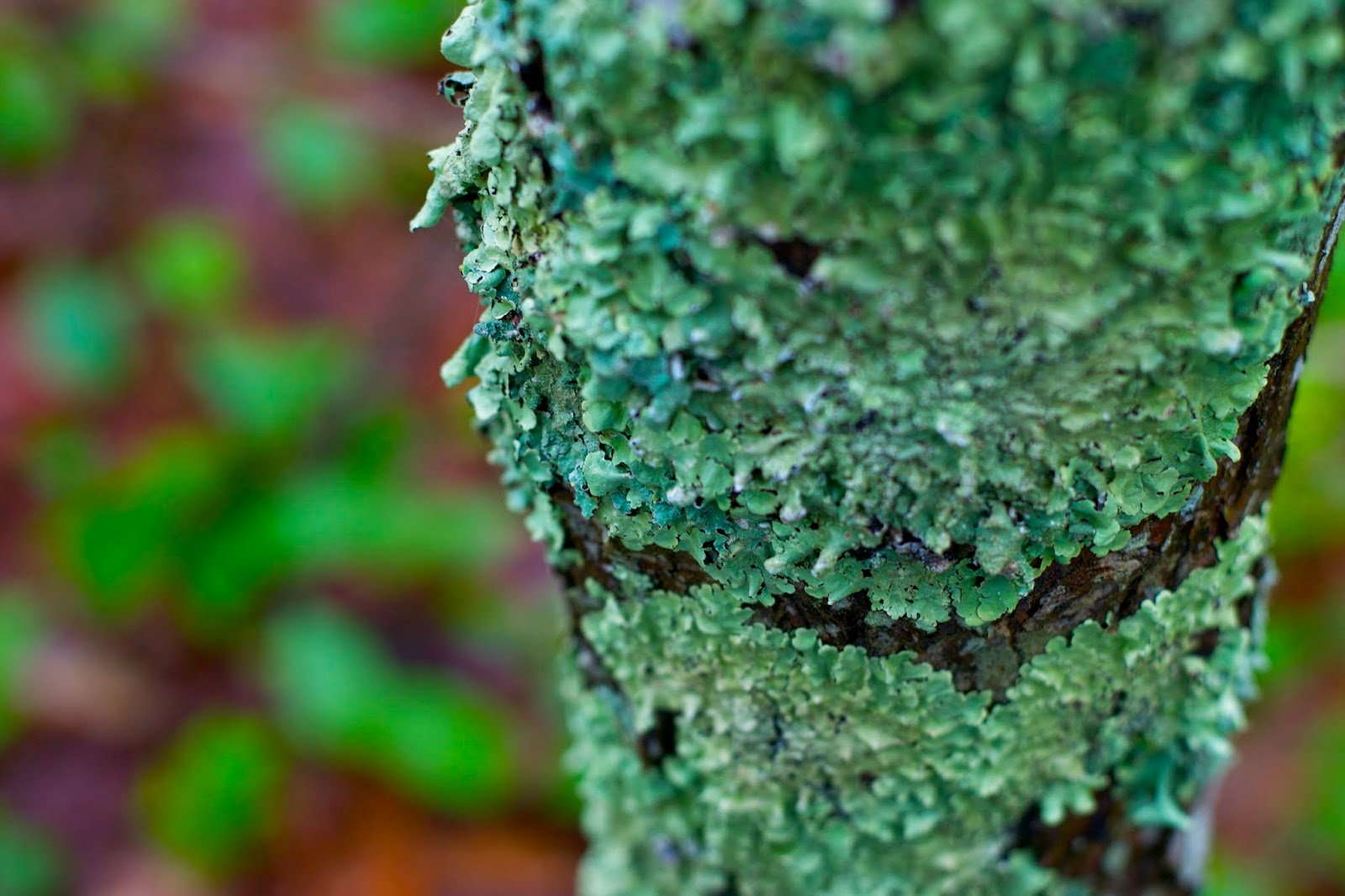 Lichen on a tree. I love the color!!!