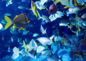 Ecositema ecosistema acuatico for Peces ornamentales acuarios