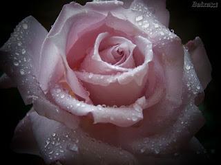 amor, sabedoria, feridas, tempo
